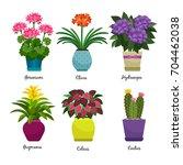 indoor garden plants and fresh... | Shutterstock .eps vector #704462038