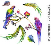 two watercolor heavenly birds... | Shutterstock . vector #704521252