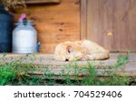 a red cat lies on the rug on... | Shutterstock . vector #704529406