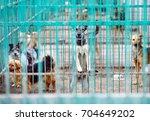 shelter for stray dogs. | Shutterstock . vector #704649202