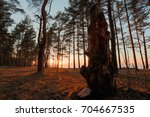 golden sunset in a pine forest | Shutterstock . vector #704667535