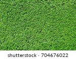 green hedge background texture   Shutterstock . vector #704676022