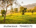 landscape view of huay tueng... | Shutterstock . vector #704682172