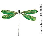 color dragonfly hand drawn.... | Shutterstock . vector #704743435