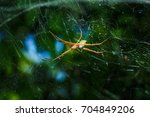 Small photo of Cobweb Araneae, Spider.