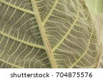 green leaf background close up... | Shutterstock . vector #704875576