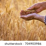 close up on the hands of a...   Shutterstock . vector #704903986