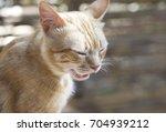 sleepy cat in nice blur... | Shutterstock . vector #704939212