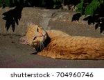 Lazy Cat Sleeping Under The Sun