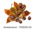 Natural Chestnuts With Chestnu...