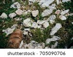 rocks and mountains | Shutterstock . vector #705090706