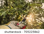 hand with garden scissors in... | Shutterstock . vector #705225862