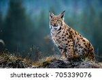 eurasian lynx   Shutterstock . vector #705339076