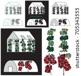 illustration of greenhouse... | Shutterstock .eps vector #705343555
