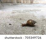 Snail's Journey.