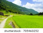 rice paddy of the blue sky and... | Shutterstock . vector #705463252