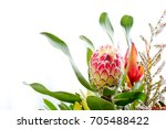 Pink And Yellow Protea Flower...