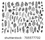 meadow wild herbs  floral twigs ... | Shutterstock .eps vector #705577732