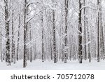 Winter Snow Covered Trees In...