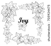 vector set with outline ivy or... | Shutterstock .eps vector #705924475