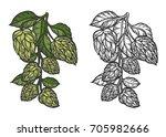 beer hop illustration color and ... | Shutterstock .eps vector #705982666