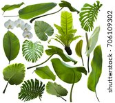Tropical Jungle Leaves...