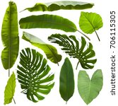 tropical jungle leaves... | Shutterstock . vector #706115305