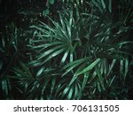 palms leaves background | Shutterstock . vector #706131505