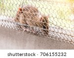 Small photo of Rat in a cage trap address-forsaken freedom with sun light.