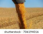 combine auger unloading corn... | Shutterstock . vector #706194016