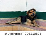 A Creole Dog Resting In A...