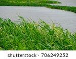 Green Grass Beside The River...
