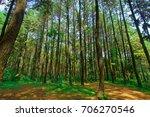 pine forests in sentul  bogor ... | Shutterstock . vector #706270546