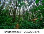 pine forests in sentul  bogor ...   Shutterstock . vector #706270576