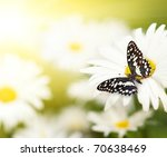 Stock photo butterfly sitting on a flower 70638469