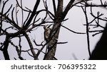 Small photo of African grey woodpecker in a tree at Waterberg South Africa