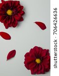 red flowers on a gray... | Shutterstock . vector #706426636