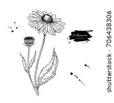 echinacea drawing. isolated... | Shutterstock . vector #706438306