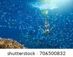 woman at snorkeling surrounded...   Shutterstock . vector #706500832