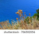 dry vegetation by the sea | Shutterstock . vector #706502056