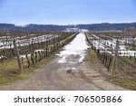 a vineyard in niagara region in ... | Shutterstock . vector #706505866
