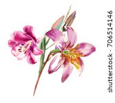 painted pink lilies. bouquet....   Shutterstock . vector #706514146