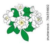 bouquet of gardenia jasminoides ... | Shutterstock .eps vector #706554802