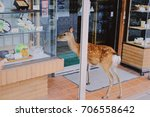 just your casual shopping | Shutterstock . vector #706558642