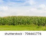 green corn field. farmland   Shutterstock . vector #706661776