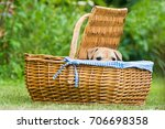 puppy in a basket | Shutterstock . vector #706698358