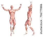 conceptual anatomy healthy... | Shutterstock . vector #706779886