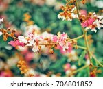 pink blossom flowers on green... | Shutterstock . vector #706801852