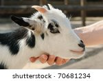 Adorable Little Goat Being...