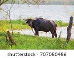 nature landscape of sri lanka ... | Shutterstock . vector #707080486